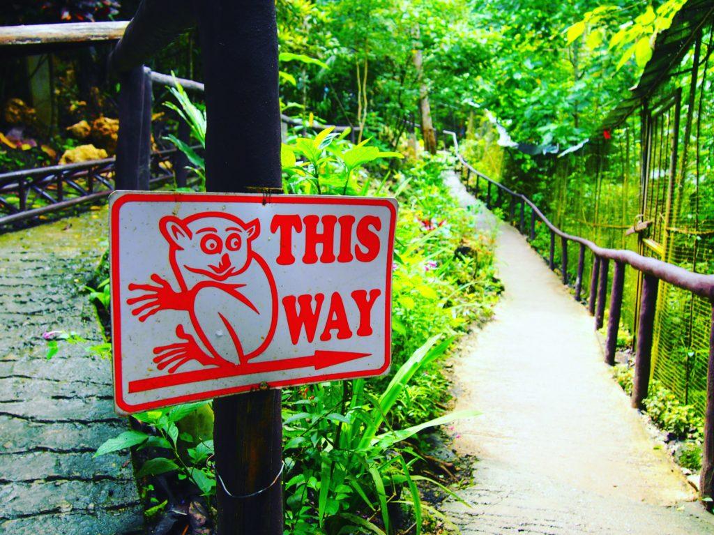 ボホール島で大自然を満喫♡
